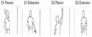 Pnf D1 Flexion  D1 Extension  D2 Flexion  D2 Extension