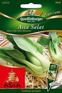 Pak Choi Samen : pak choi mini misome von quedlinburger saatgut ~ Orissabook.com Haus und Dekorationen