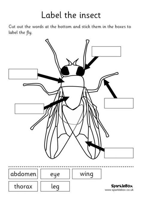 label  insect set sb sparklebox