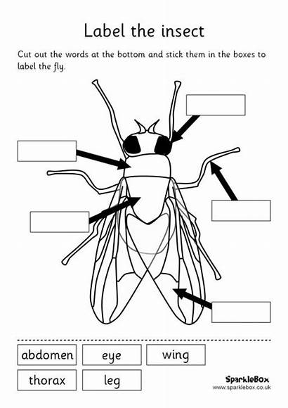 Label Worksheet Insect Parts Insects Science Fly
