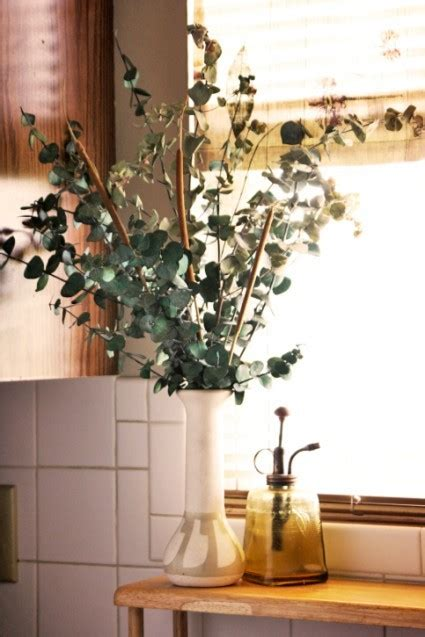 growing eucalyptus indoors do you know that eucalyptus can be grown as houseplant blog nurserylive com gardening in india