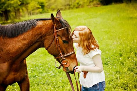 horse pet know ways keep practical safe care nurture horses pets season hind limb shock