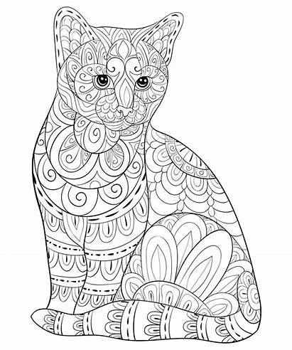 Coloring Cat Cats Simple Zentangle Patterns Chat