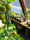 3 Ways How to Start Indoor Vegetable Garden for Beginners indoor vegetable garden ideas