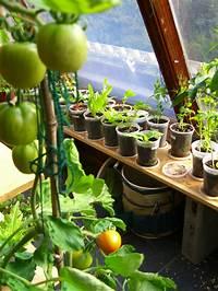 indoor vegetable garden ideas 3 Ways How to Start Indoor Vegetable Garden for Beginners