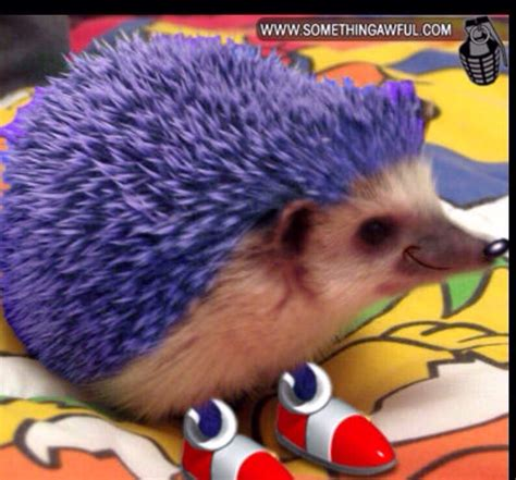 Its Sonic In Real Life Sonic The Hedgehog Amino