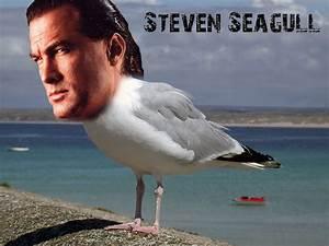 Pin Steven Seagal Sh on Pinterest