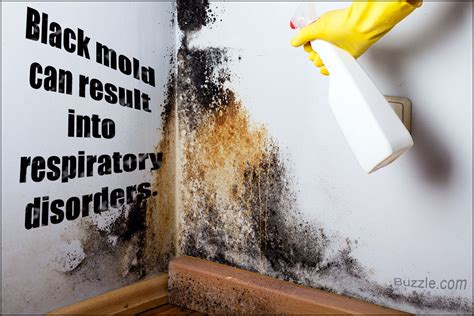 Kick Ass Remedies And Tips On How To Kill Harmful Black Mold