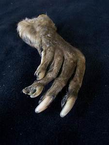 Taxidermy Large Monkey Paw – Dapper Cadaver Props