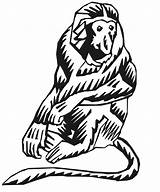 Monkey Proboscis Coloring Stylized Monkeys Printactivities Designlooter Drawings 795px 47kb sketch template
