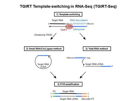 template switching reverse transcriptase template switching image collections