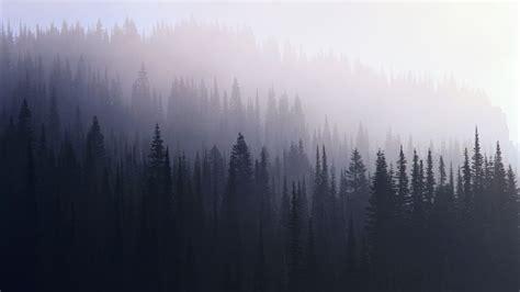 photography dark forest wallpaper hipster wallpaper