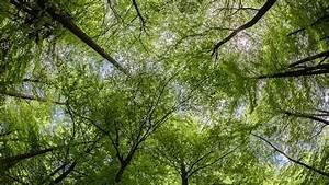 Bilder Vom Wald : lebensgemeinschaft wald 2 nahrungsbeziehungen und stoffkreisl ufe im wald schulfernsehen ~ Yasmunasinghe.com Haus und Dekorationen