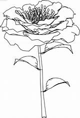 Perspective Coloring Rose Flowers Wecoloringpage sketch template