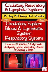 Circulatory  Respiratory  Lymphatic Systems 10 Day No Prep