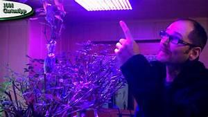 Led Grow Erfahrung : watch led grow lampe erfahrung on lampen klassiker nk ~ Watch28wear.com Haus und Dekorationen