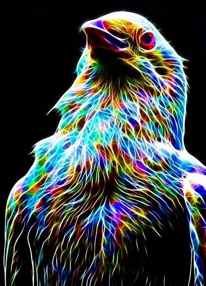Megaossa Colorful Deviantart Crow Animals