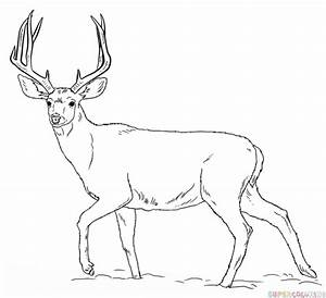 How to draw a mule deer | Step by step Drawing tutorials