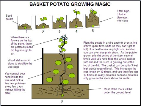 how to grow potatoes how to grow potatoes in a container 101 ways to survive