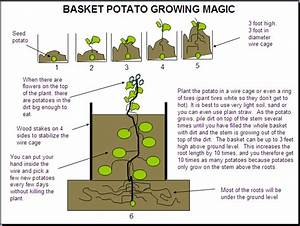 How To Grow Potatoes In A Container  U2013 101 Ways To Survive