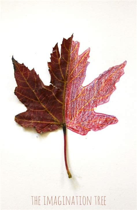 mirror leaf drawings nature art autumn arts  crafts