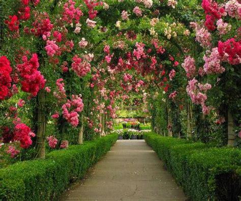 roses gardens romantic flowers rose garden