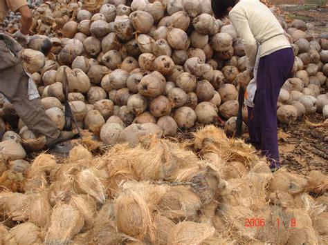 bisnis emas sabut kelapa produk olahan hasil kelapa
