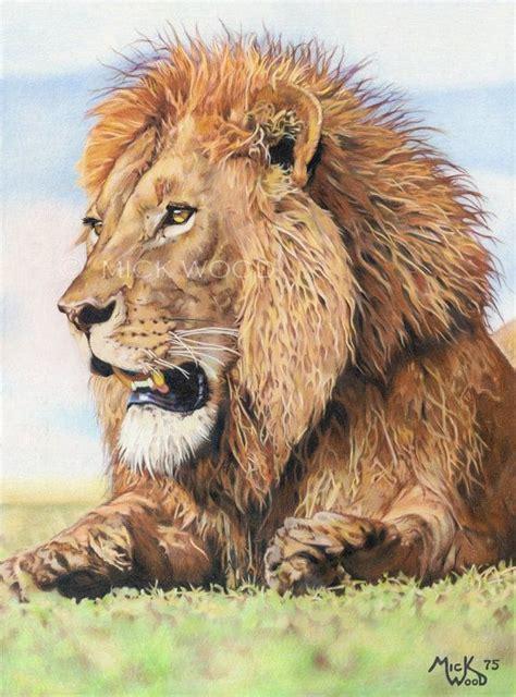 lion print  original colored pencil drawing  mick