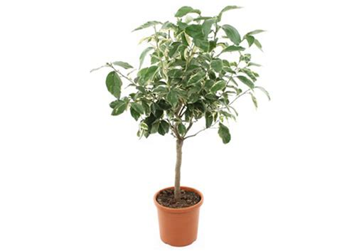 planter un arbre fruitier en pot planter un arbre plantation des arbres et arbustes with planter un arbre finest placer les