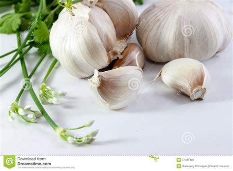 is garlic a vegetable garlic and vegetable royalty free stock photos image 37084408