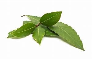 Portugiesischer Lorbeer Gelbe Blätter : lorbeer bl tter braune r nder ~ Eleganceandgraceweddings.com Haus und Dekorationen