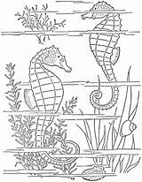 Coloring Pages Seahorse Adult Seahorses Printable 1950s Ocean Printables Fairy Animal Books Getcolorings Info Theme Beach sketch template