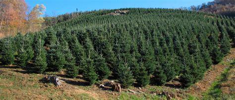 christmas tree farm chattanooga tn weaver tree farm 8691