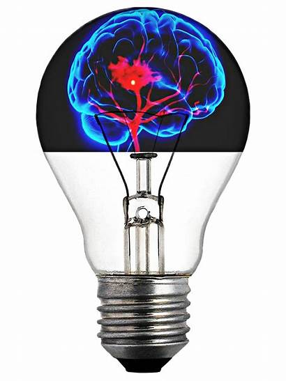 Brain Learning Whole Science Social Bulb Advanced
