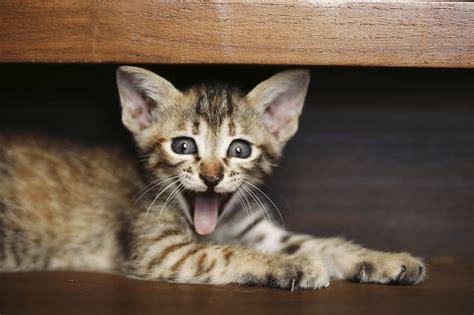 lustige katzen im netz wir zeigen dir lustigsten
