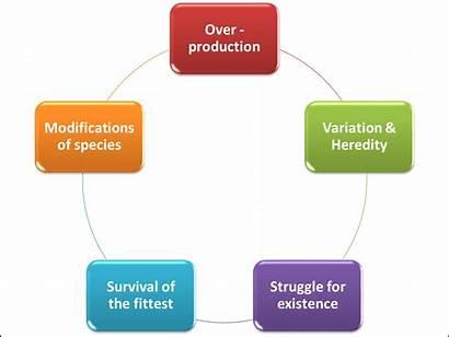 Darwinism Principles Evolution Theories Consists Five Examrace