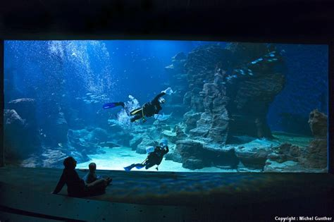aquarium mare nostrum planetarium galilee aquarium mare nostrum planetarium galilee