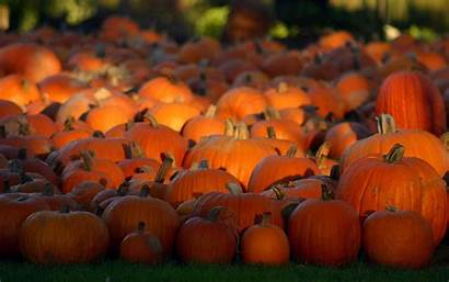 Pumpkin Desktop Wallpapers Backgrounds Pumpkins Fall Keywords