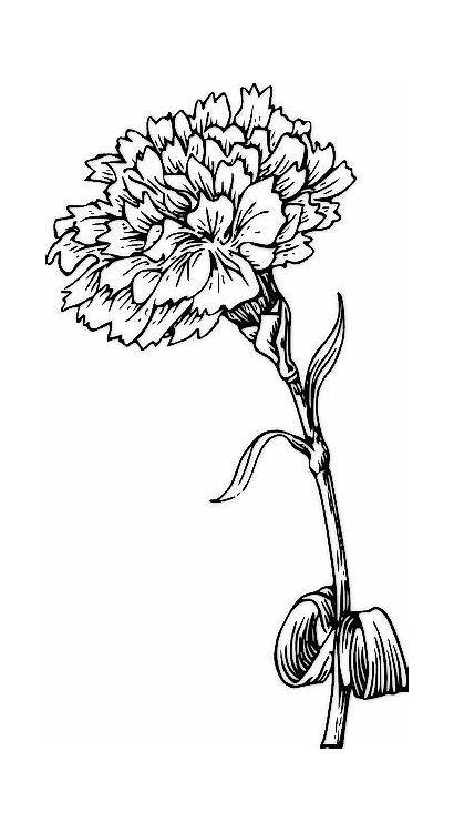 Flower Coloring Drawing Birth Tattoo Carnation January