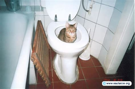 litiere dans les toilettes eautarcie trois g 233 n 233 rations de toilettes s 232 ches