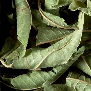 Verveine Plante Tisane : infusion tisanes n 470 verveine ~ Mglfilm.com Idées de Décoration