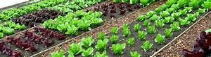Salat Pflanzen Abstand : hochbeet pflanzplan was wann anpflanzen ~ Markanthonyermac.com Haus und Dekorationen