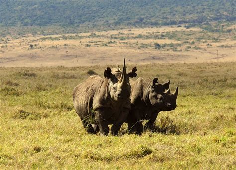 South African Safari - Zoos SA