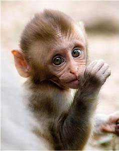 really cute baby monkeys Quotes