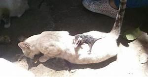 Petit Travaux Chez Particulier : cette petite chatte revient chez elle avec un b b un peu ~ Dode.kayakingforconservation.com Idées de Décoration