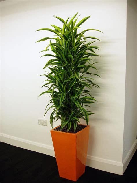 plantes de bureau sans soleil 17 idées de plantes qui poussent sans lumière du soleil