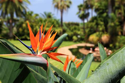 tropical plants of hawaii top 3 care tips for hawaiian plants south maui gardens kihei nearsay