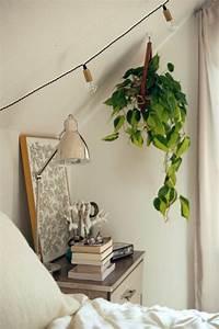 Hängende Zimmerpflanzen können die beste Hänge Dekoration sein! Archzine net