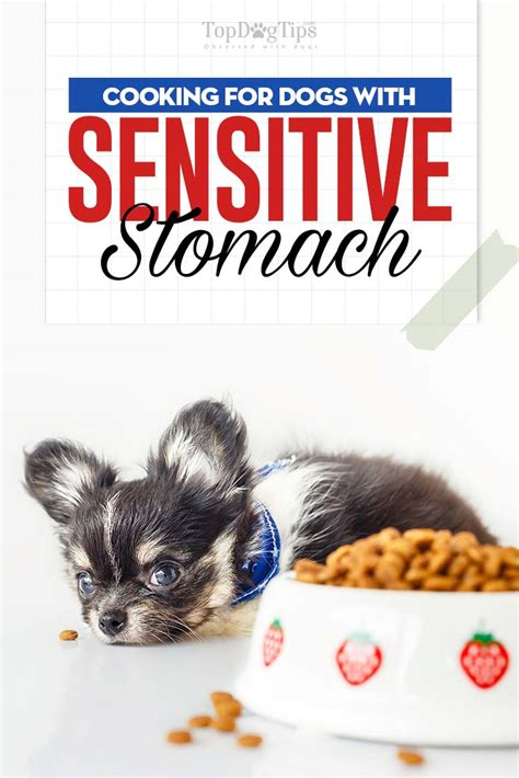 Dietary Guidelines For Dogs With Sensitive Stomachs Top