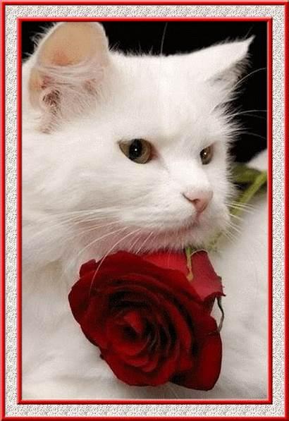Cat Rose Flashing Luvbat
